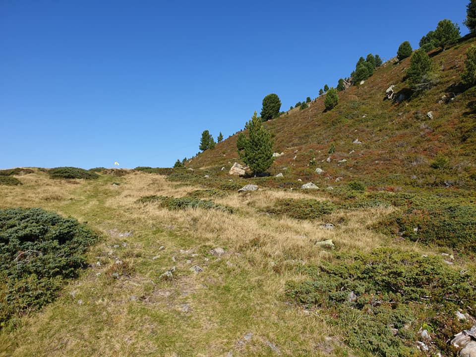 Grüner Trail beim Dynafit Trailrun3 in Imst.